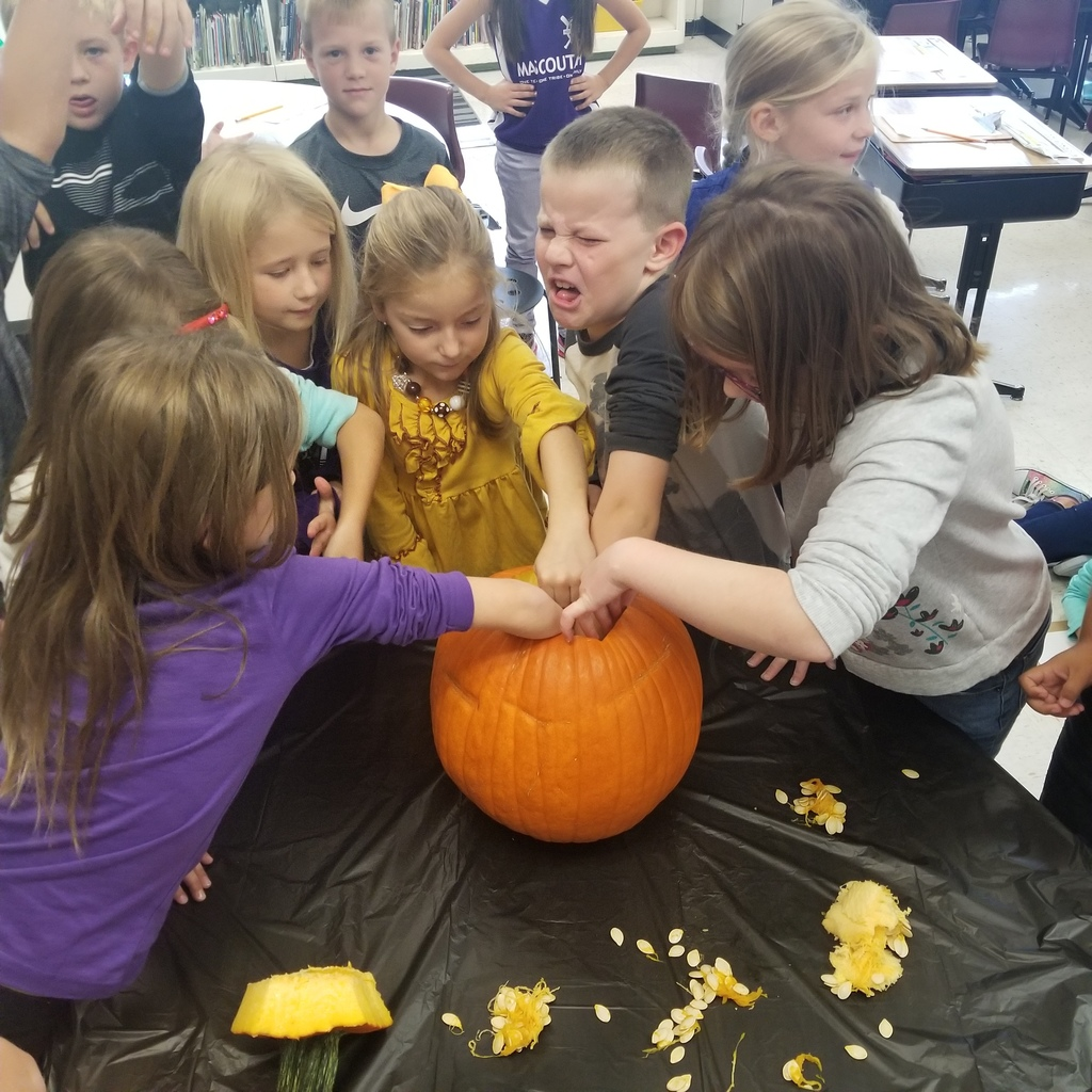 Touching the inside of the pumpkin, making predictions about how many seeds it would contain!